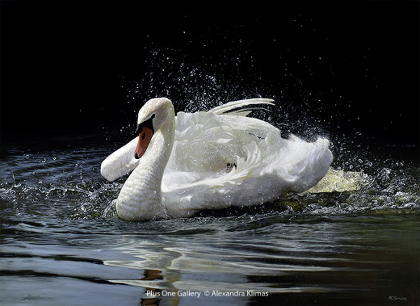 Alexandra Klimas, Beauty the Mute Swan