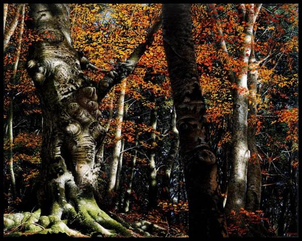 Raphaella Spence, Autumn Colours