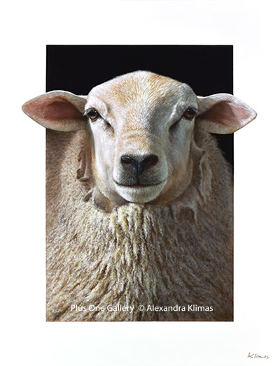 Alexandra Klimas, Eliza the Sheep