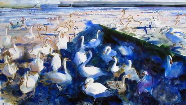 John Short, Swans in Bray Harbour
