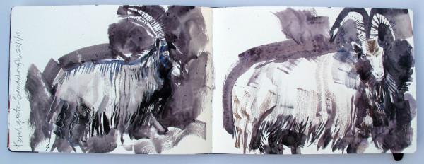 John Short, Sketchbook Study of Feral Goats, Glendalough, County Wicklow