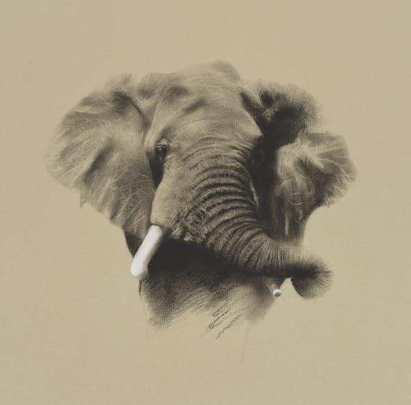 African Bull Elephant, 2020