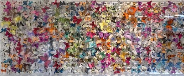 Papillon Deux Mille, 2021