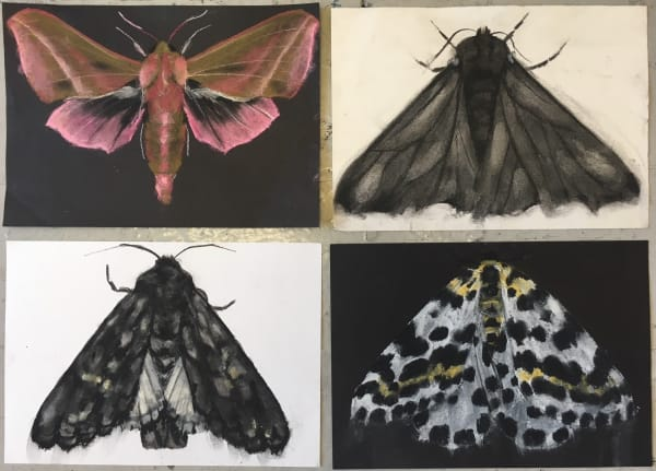 Abigail Reed, Moth drawings, 2018