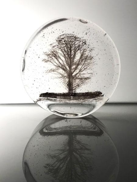 Helen Slater, Oak Tree
