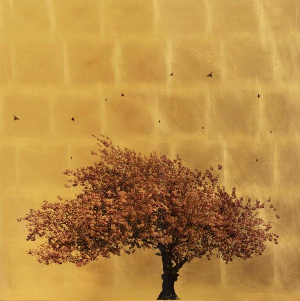 Robert Pereira Hind, Prunus Serrulata In Excelsis