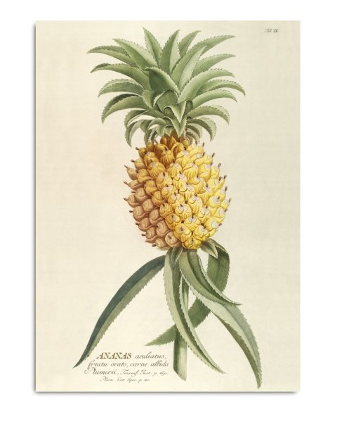 Framed Prints, Ananas 3700
