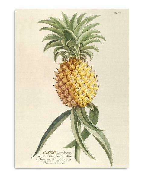 Framed Prints, Plantae Prints 3700
