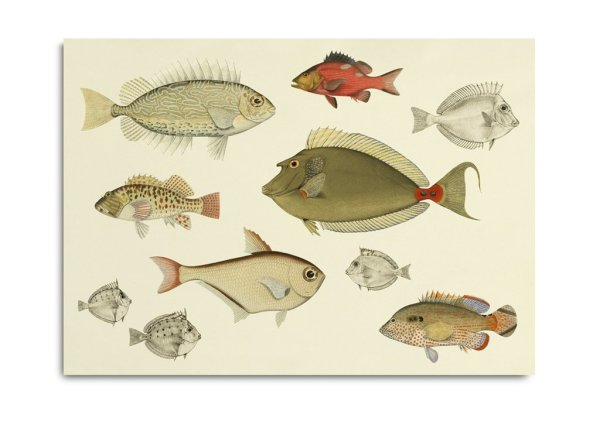 Framed Prints, Fishes 3902H