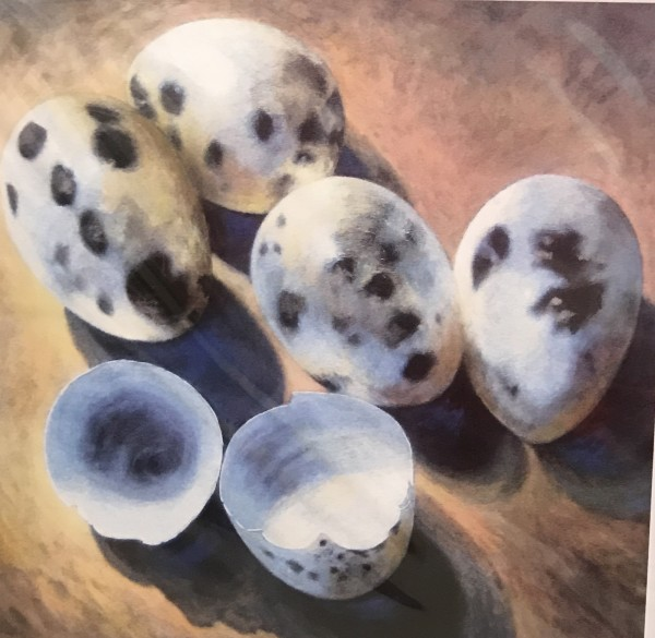 Joyce Pinch, Quails Eggs