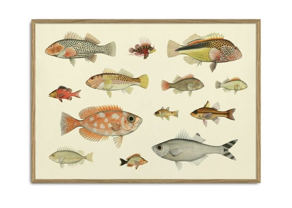Framed Prints, Fishes 3904H