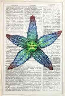Unframed Prints, Starfish
