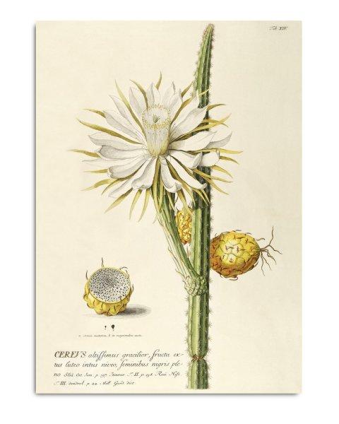 Framed Prints, Plantae Prints 3707