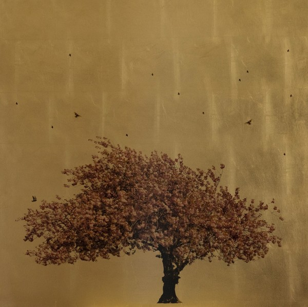 Robert Pereira Hind, Prunus Serrulata In Excelsis II