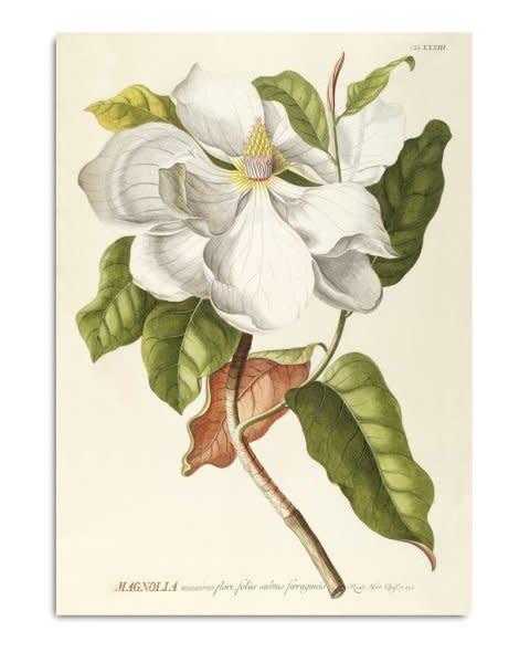 Unframed Prints, Magnolia 3713