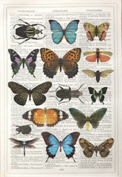 Unframed Prints, Butterflies and Bugs
