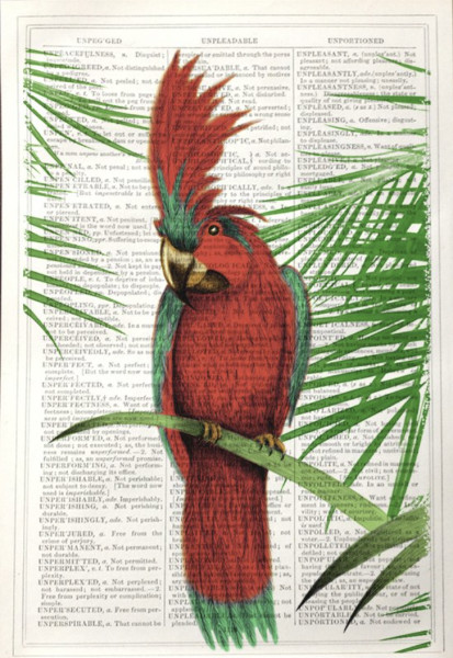 Unframed Prints, Green and Red Parrot