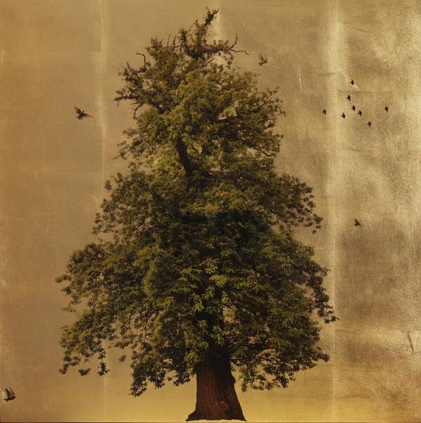 Robert Pereira Hind, Populus Summer