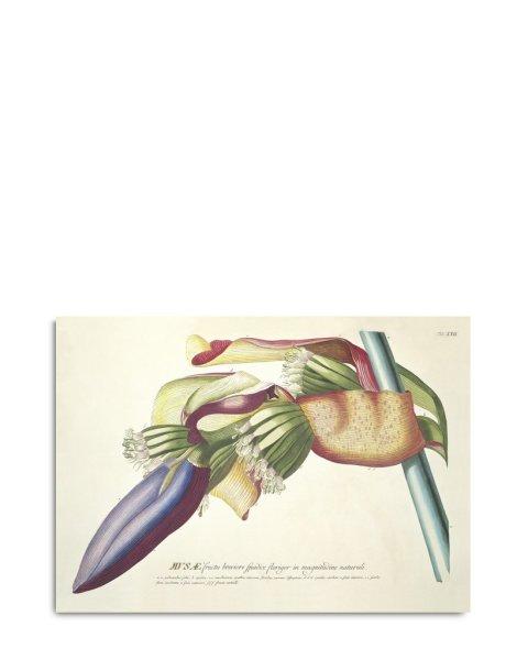 Framed Prints, Plantae Prints 3706