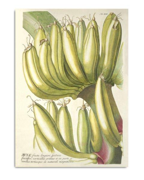 Framed Prints, Plantae Prints 3703