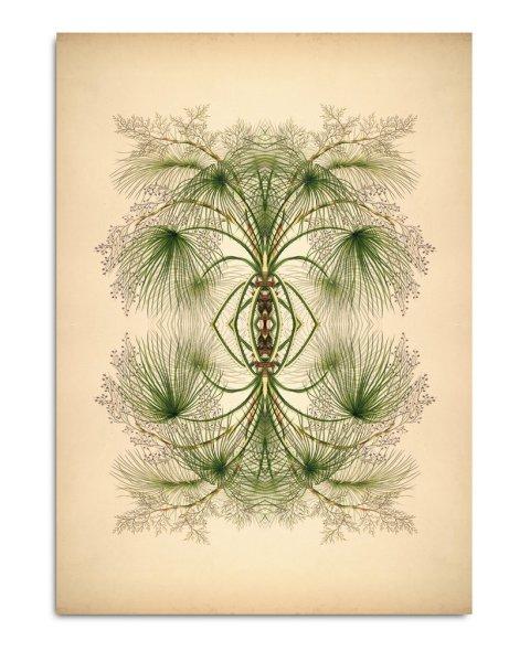 Unframed Prints, Reflections 8806
