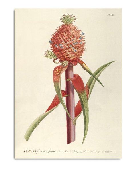 Framed Prints, Plantae Prints 3701