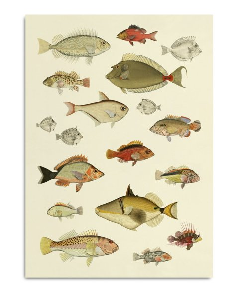 Framed Prints, Fishes 3905P