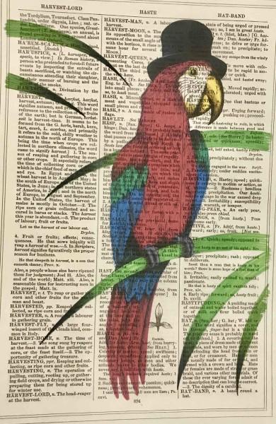 Unframed Prints, Top Hat Parrot