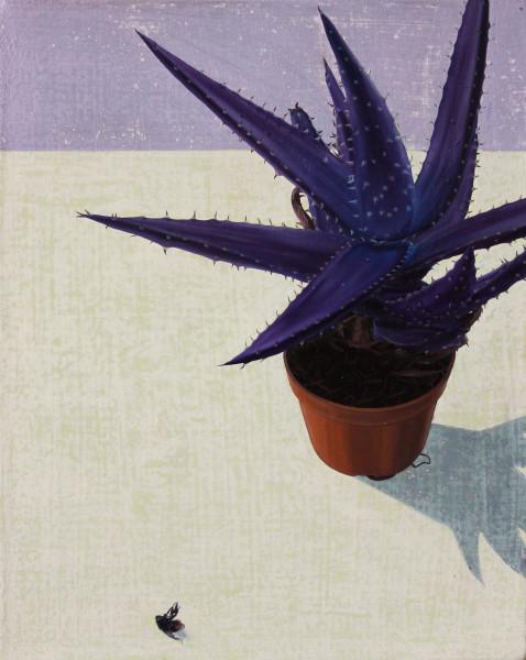 Tristan Pigott, Save The Cacti