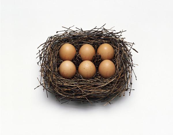 Nest, 2016