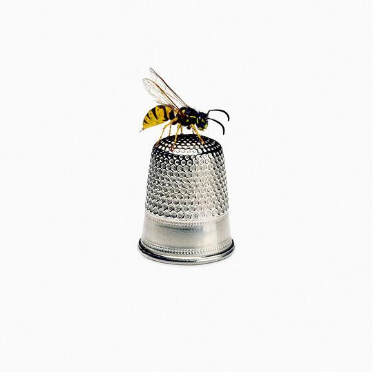 Wasp, 2016