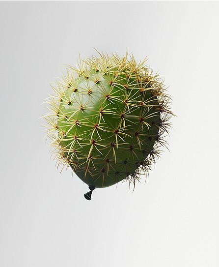 Cactus, 2016