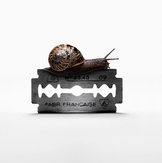 Snail, 2016