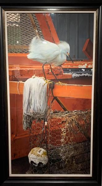 Carl Brenders, Snowy Egret