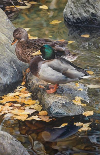 Carl Brenders, Mallard Ducks Resting