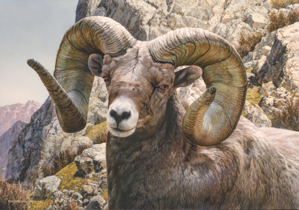 Carl Brenders, Big Horn Sheep