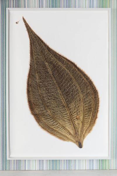 <span class=%22title%22>Herbarium Amazonas<span class=%22title_comma%22>, </span></span><span class=%22year%22>2014</span>
