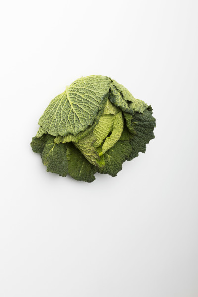 <span class=%22title%22>Savoy Cabbage / Wirsing<span class=%22title_comma%22>, </span></span><span class=%22year%22>2012</span>