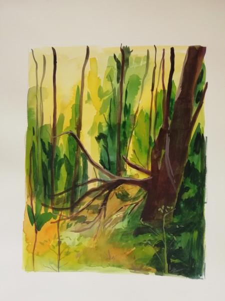 Lucy Smallbone, Forest, 2020