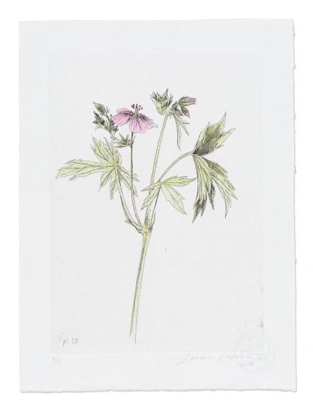 Sarah Horowitz, Sticky geranium, 2016