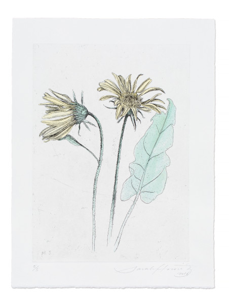 Sarah Horowitz, Arrow-Leaf Balsamroot, 2016