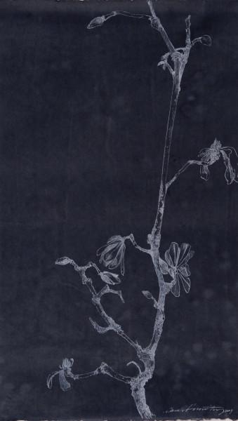 Sarah Horowitz, Blue Magnolia III, 2007