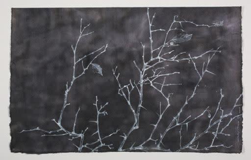 Sarah Horowitz, Black Hawthorn II, 2015