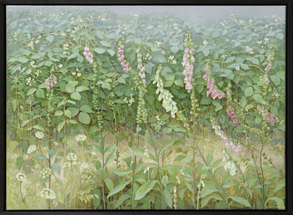 Jane Wormell, Foxgloves with Flowering Brambles, 2020