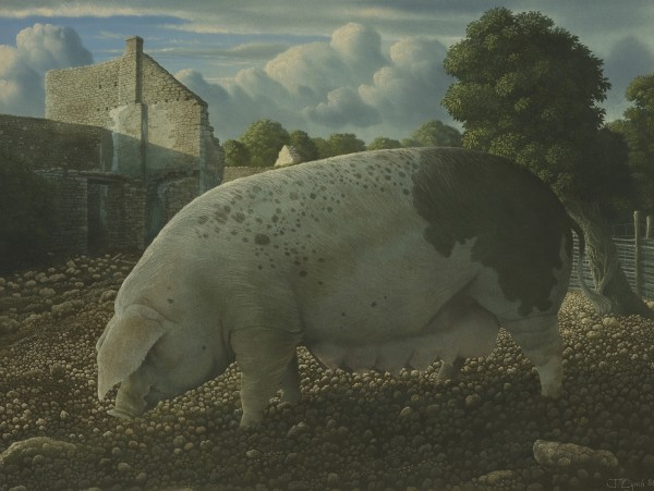 James Lynch, Mary (Old Spot Sow)