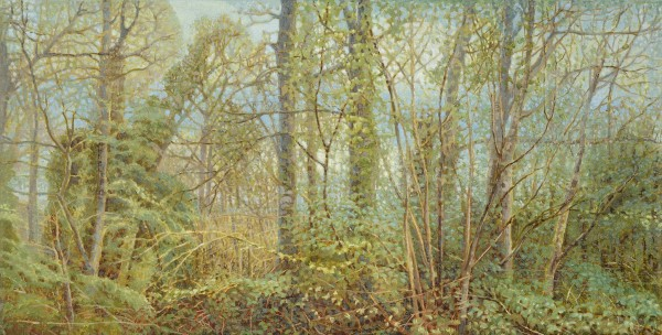 Jane Wormell, Spring Woodland