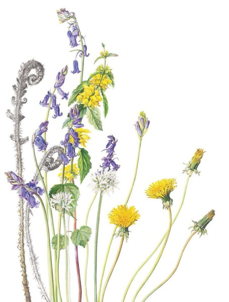 Dandelions and other flowers
