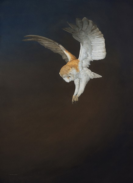 Tim Hayward, Barn Owl