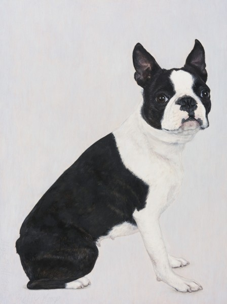 Betty Boop (Boston Terrier)