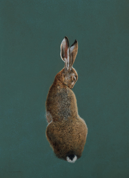 Tim Hayward Brown Hare - Terre Verte Watercolour and gouache on Fabriano Artistico 300gsm paper 28 × 20 ins (71.12 × 50.8 cm)